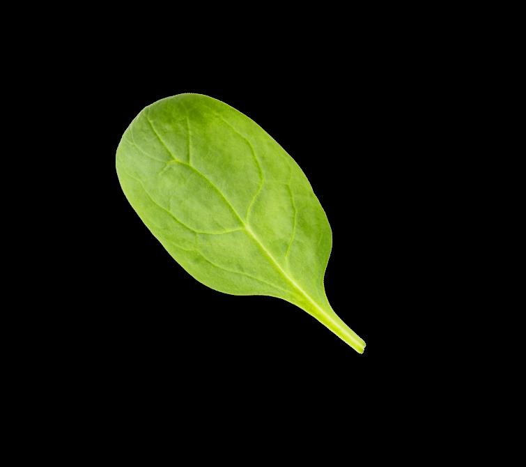 Spinach1@3x